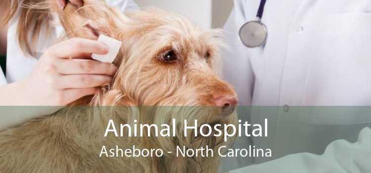 Animal Hospital Asheboro - North Carolina