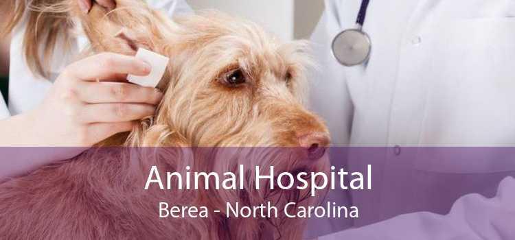 Animal Hospital Berea - North Carolina
