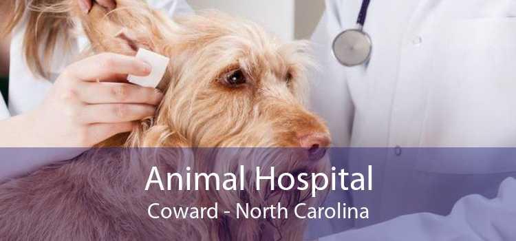 Animal Hospital Coward - North Carolina