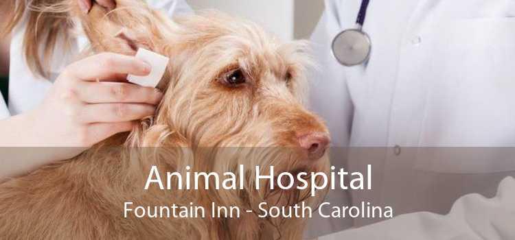 Animal Hospital Fountain Inn - South Carolina