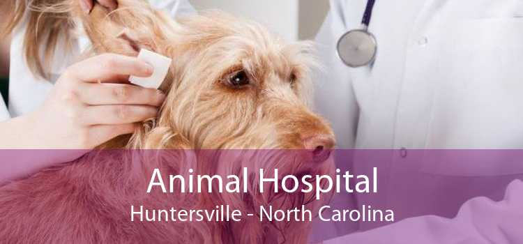 Animal Hospital Huntersville - North Carolina