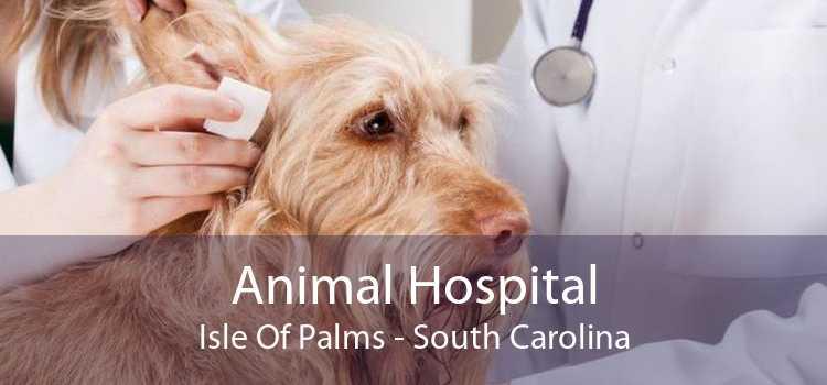 Animal Hospital Isle Of Palms - South Carolina