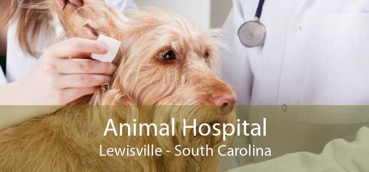 Animal Hospital Lewisville - South Carolina
