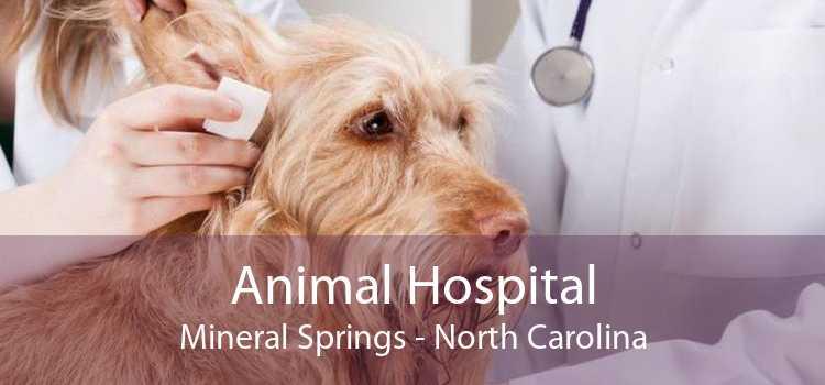 Animal Hospital Mineral Springs - North Carolina