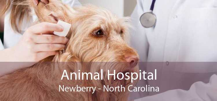 Animal Hospital Newberry - North Carolina