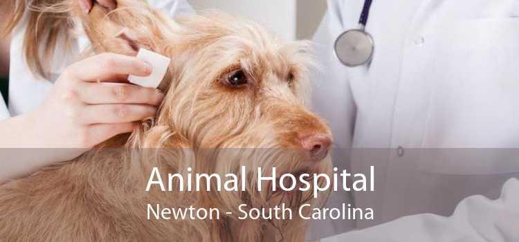 Animal Hospital Newton - South Carolina