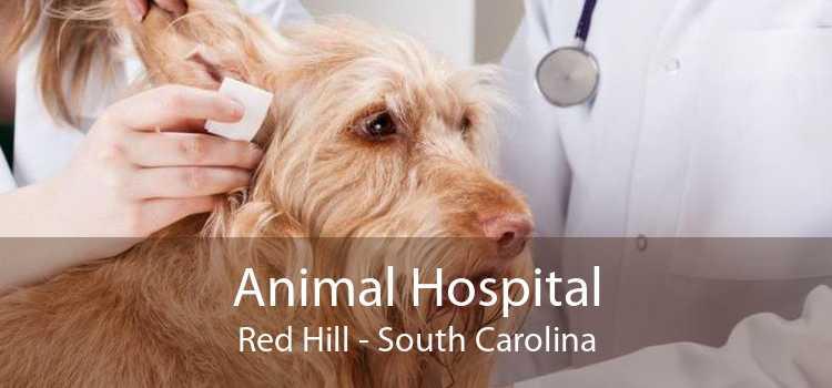 Animal Hospital Red Hill - South Carolina