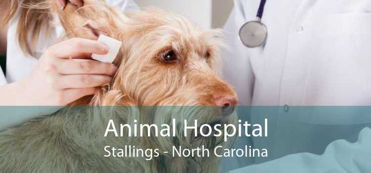 Animal Hospital Stallings - North Carolina