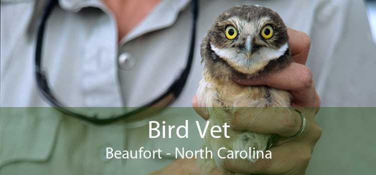 Bird Vet Beaufort - North Carolina