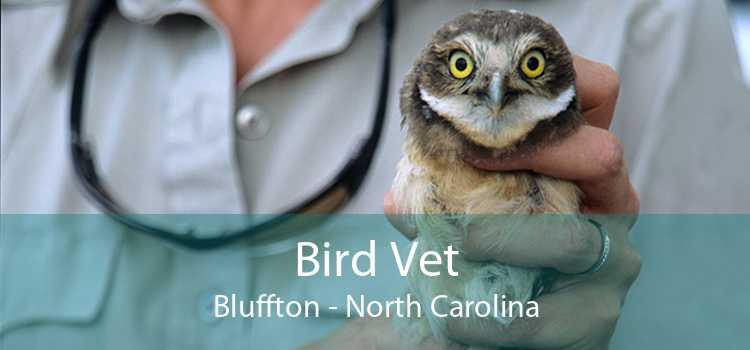 Bird Vet Bluffton - North Carolina