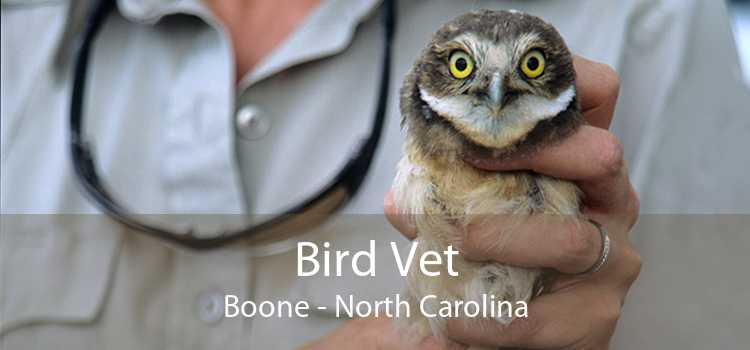 Bird Vet Boone - North Carolina
