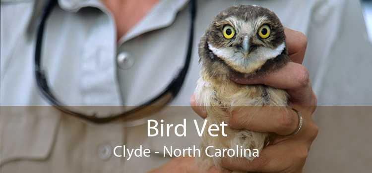 Bird Vet Clyde - North Carolina