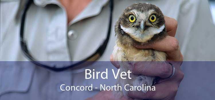 Bird Vet Concord - North Carolina