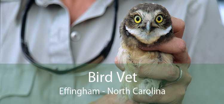 Bird Vet Effingham - North Carolina
