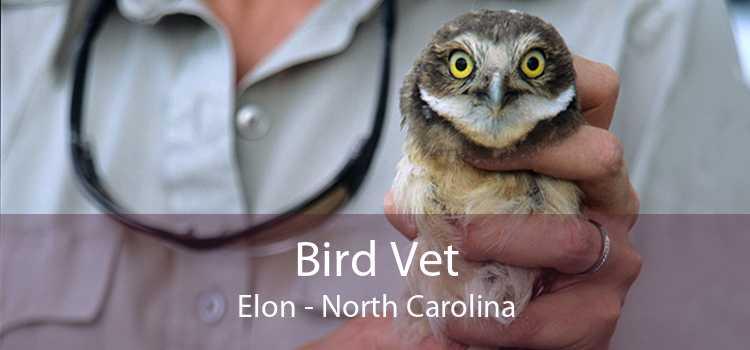 Bird Vet Elon - North Carolina