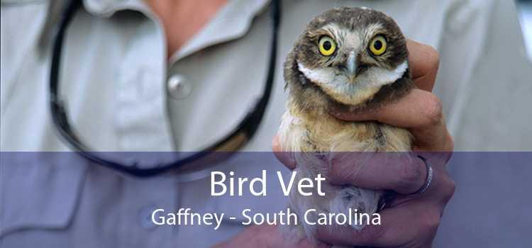 Bird Vet Gaffney - South Carolina