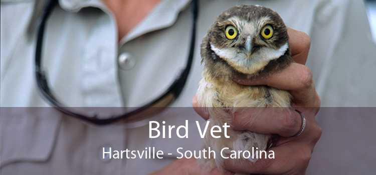 Bird Vet Hartsville - South Carolina