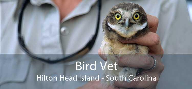Bird Vet Hilton Head Island - South Carolina
