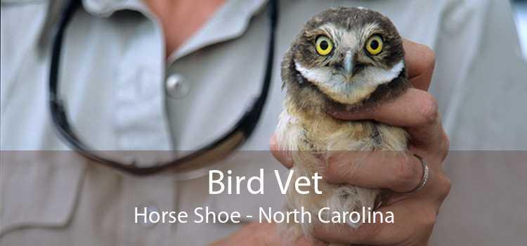 Bird Vet Horse Shoe - North Carolina
