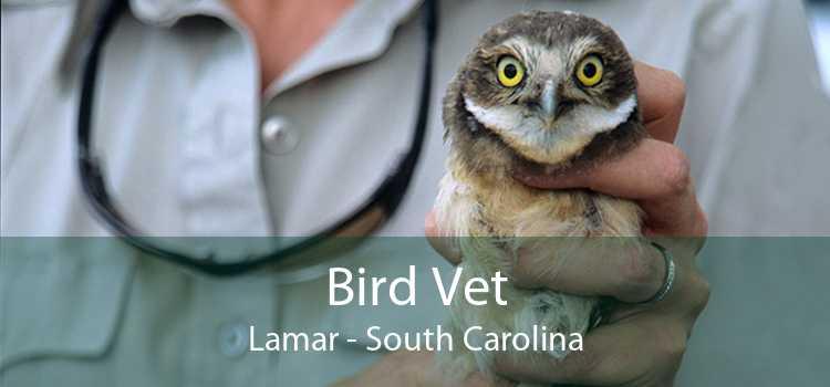 Bird Vet Lamar - South Carolina