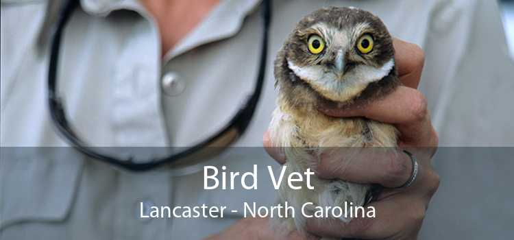 Bird Vet Lancaster - North Carolina