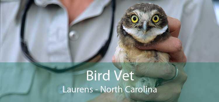 Bird Vet Laurens - North Carolina