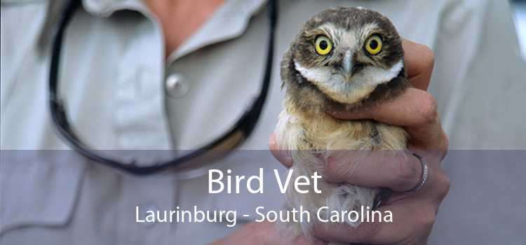 Bird Vet Laurinburg - South Carolina