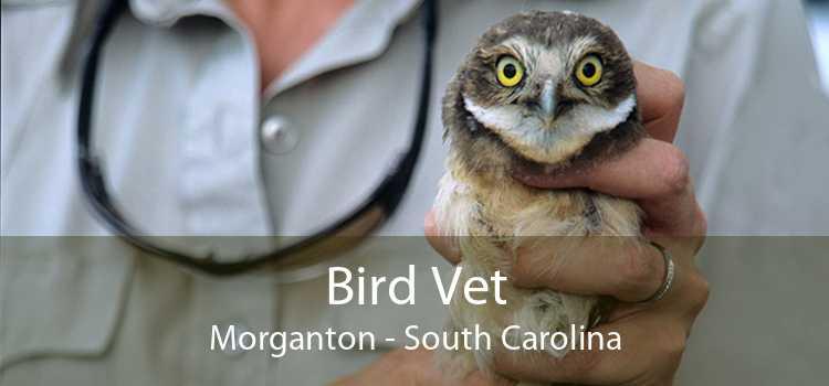 Bird Vet Morganton - South Carolina