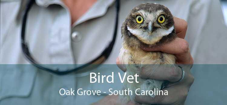 Bird Vet Oak Grove - South Carolina