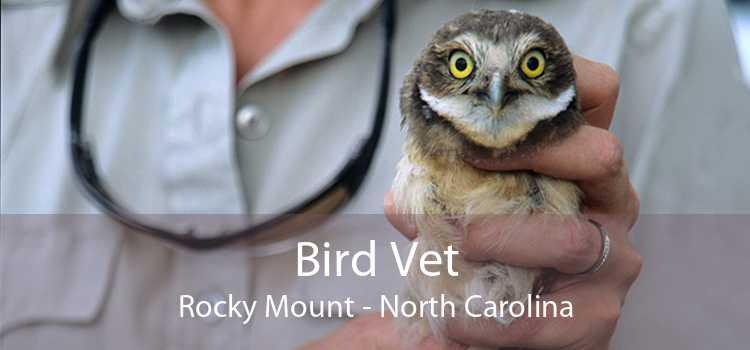 Bird Vet Rocky Mount - North Carolina