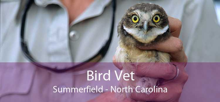 Bird Vet Summerfield - North Carolina