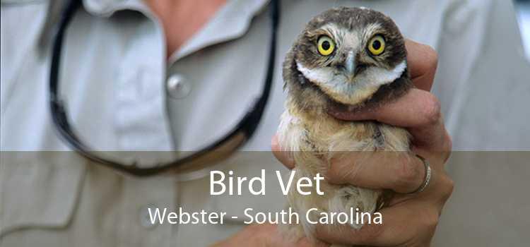 Bird Vet Webster - South Carolina