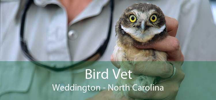 Bird Vet Weddington - North Carolina
