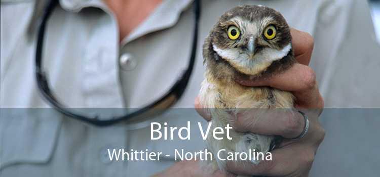 Bird Vet Whittier - North Carolina