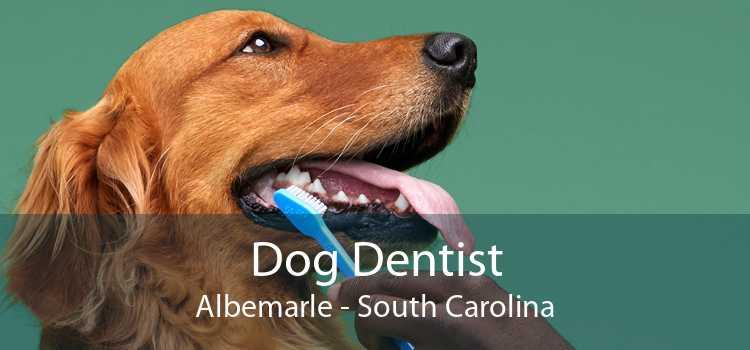 Dog Dentist Albemarle - South Carolina