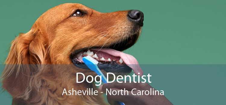 Dog Dentist Asheville - North Carolina