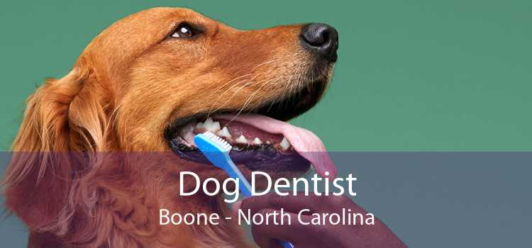 Dog Dentist Boone - North Carolina