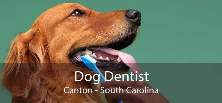 Dog Dentist Canton - South Carolina