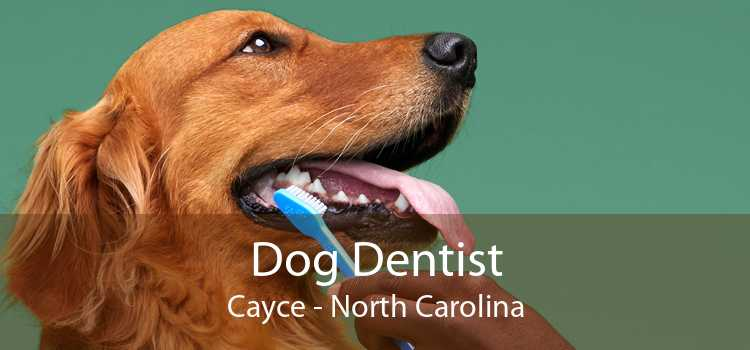 Dog Dentist Cayce - North Carolina