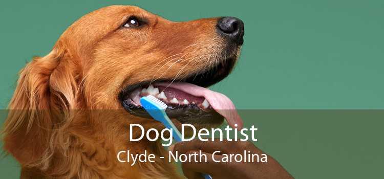 Dog Dentist Clyde - North Carolina