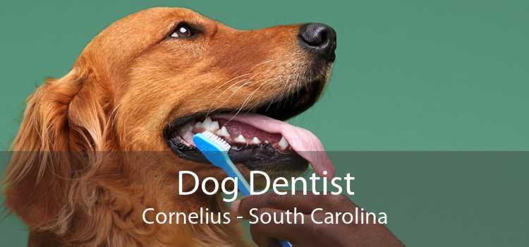 Dog Dentist Cornelius - South Carolina