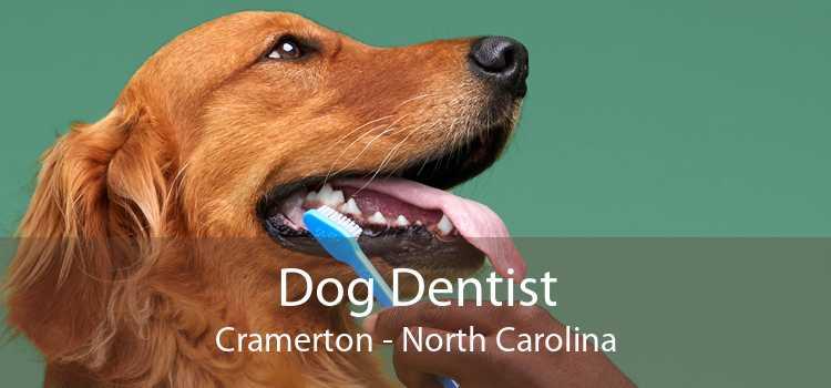 Dog Dentist Cramerton - North Carolina
