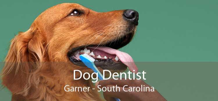 Dog Dentist Garner - South Carolina
