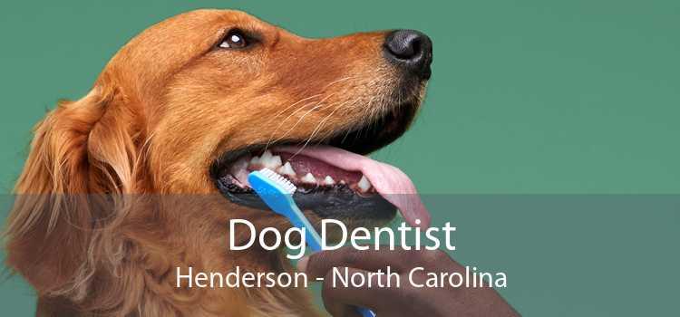Dog Dentist Henderson - North Carolina