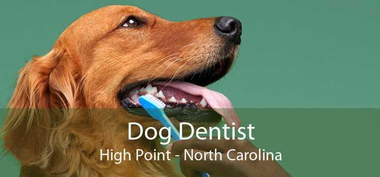 Dog Dentist High Point - North Carolina