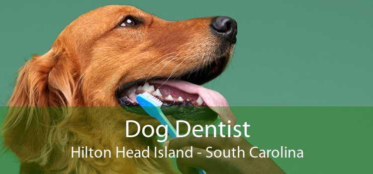 Dog Dentist Hilton Head Island - South Carolina
