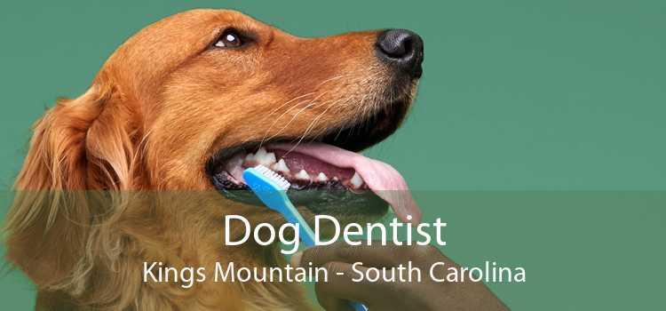 Dog Dentist Kings Mountain - South Carolina