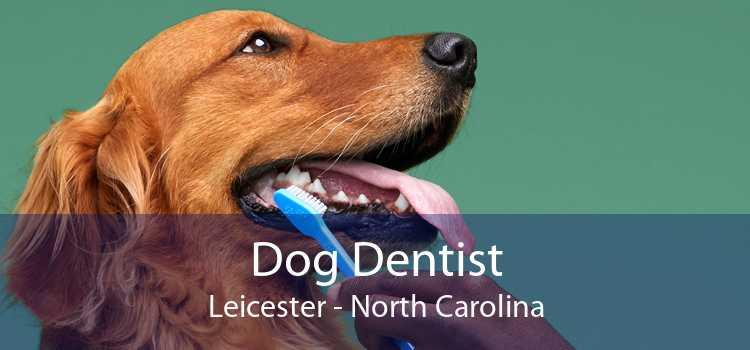 Dog Dentist Leicester - North Carolina