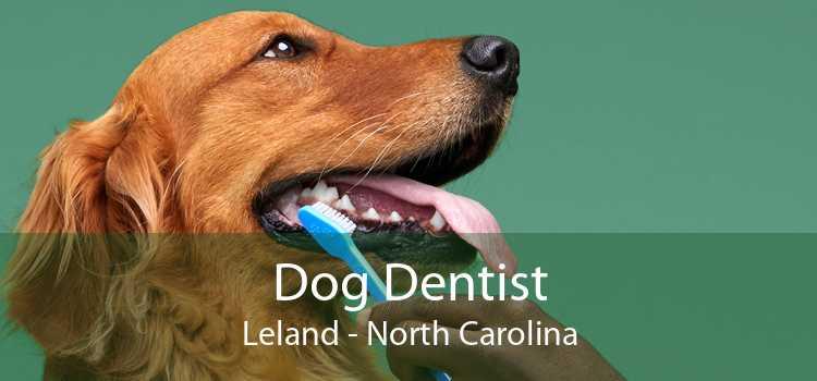 Dog Dentist Leland - North Carolina