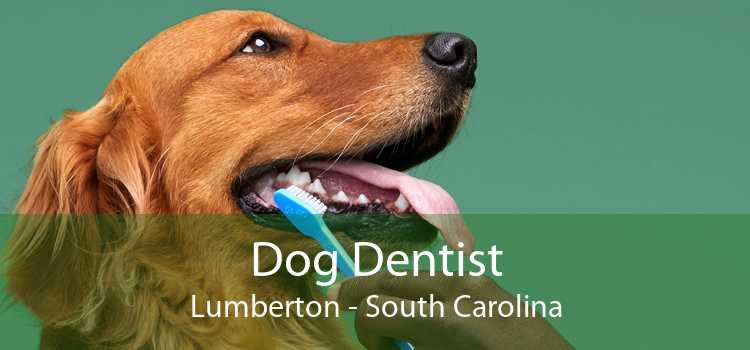 Dog Dentist Lumberton - South Carolina